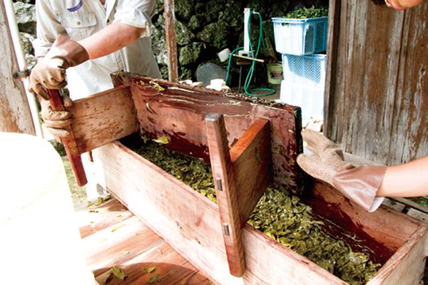 阿波晩茶の製造